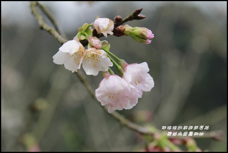 碧絡角庭園咖啡18.JPG