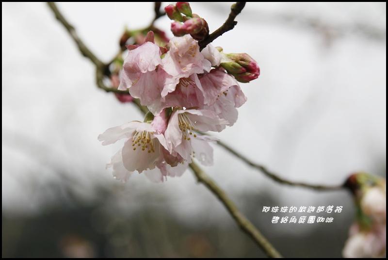 碧絡角庭園咖啡17.JPG