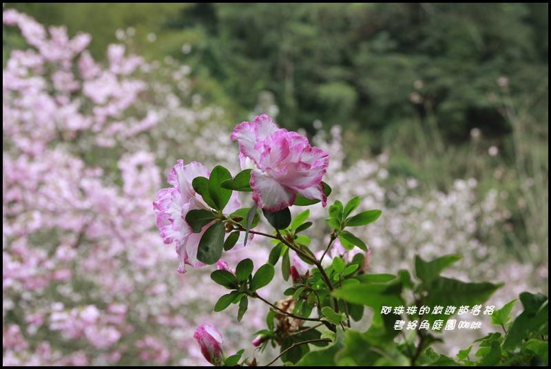 碧絡角庭園咖啡39.JPG