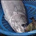 粉鳥林魚港45.JPG