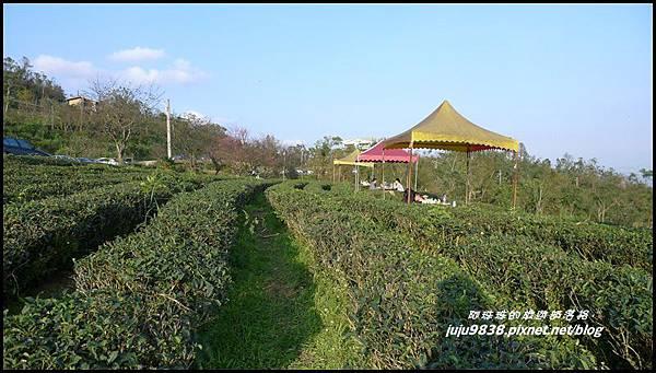 玉蘭茶園22.JPG