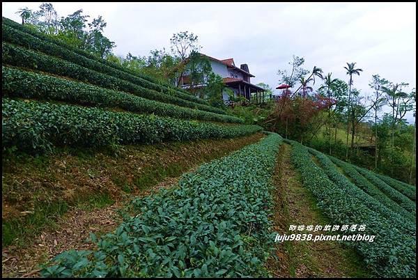 玉蘭茶園46.JPG