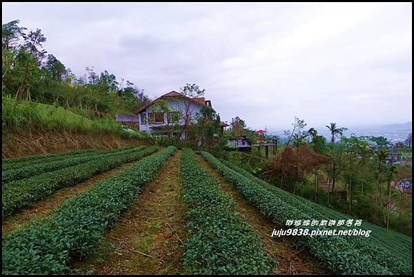玉蘭茶園47.JPG