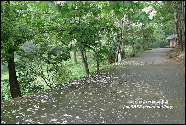 桐花走廊49.JPG
