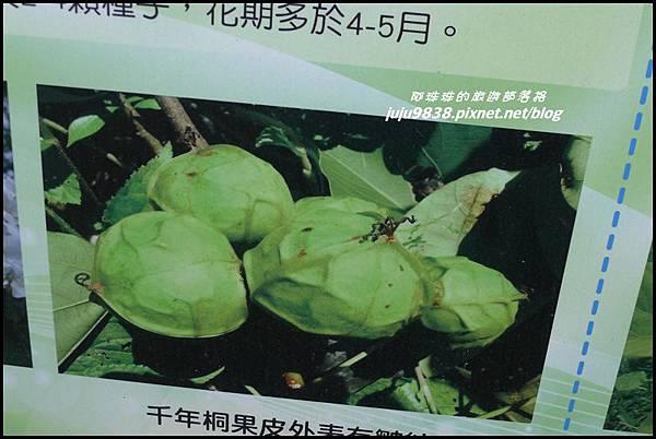 客家大院桐花公園25.JPG