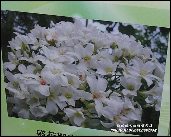 客家大院桐花公園26.JPG