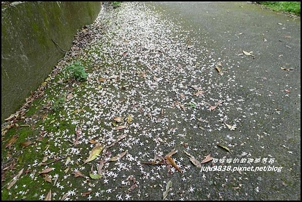 鴛鴦谷瀑布13.JPG