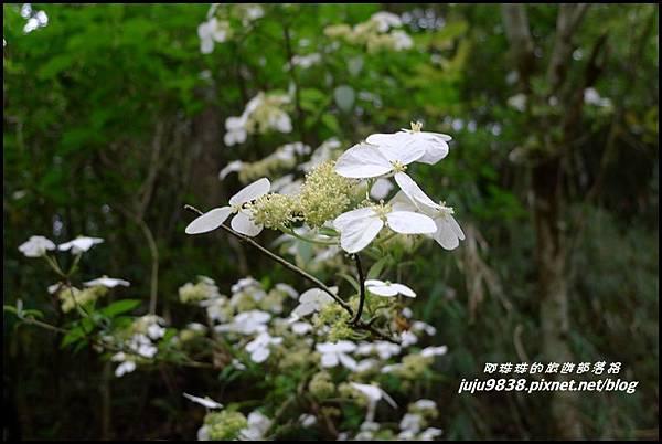 鴛鴦谷瀑布37.JPG