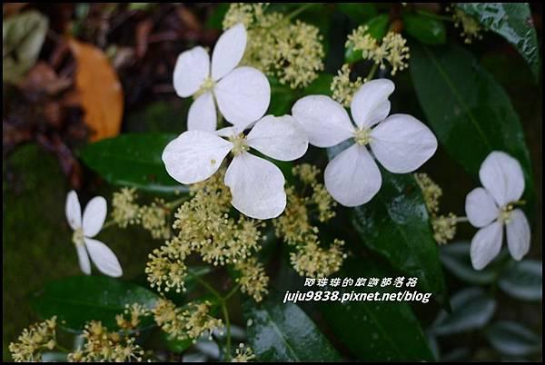 鴛鴦谷瀑布53.JPG