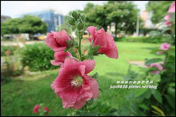 山仔頂公園22.JPG
