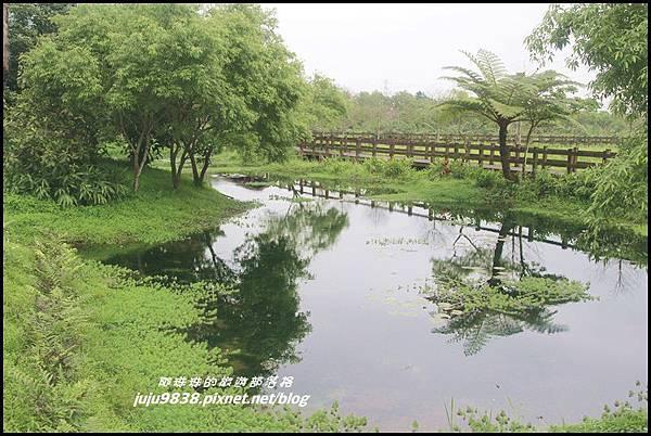 馬太鞍濕地8.JPG