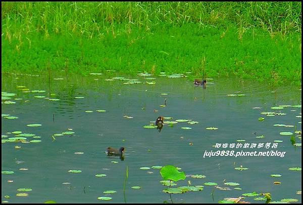 馬太鞍濕地31.JPG