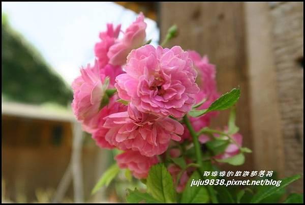 玫瑰山谷21.JPG