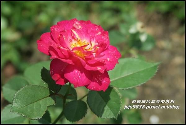 玫瑰山谷31.JPG