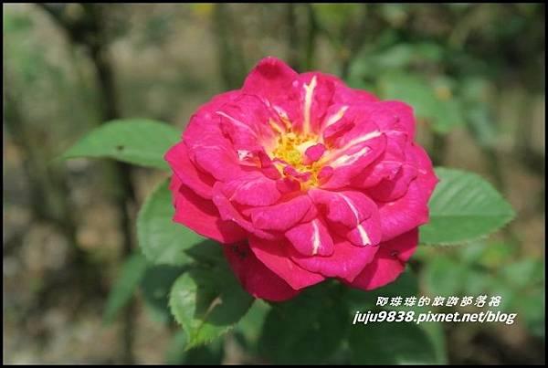 玫瑰山谷33.JPG