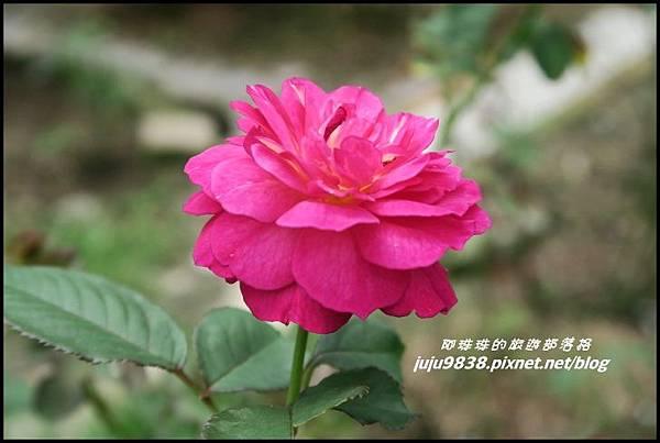 玫瑰山谷50.JPG