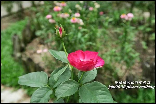 玫瑰山谷52.JPG