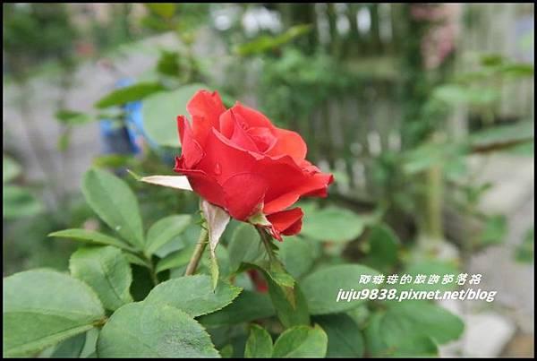 玫瑰山谷53.JPG