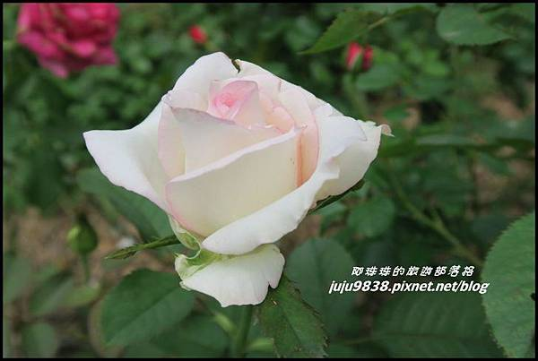 玫瑰山谷55.JPG