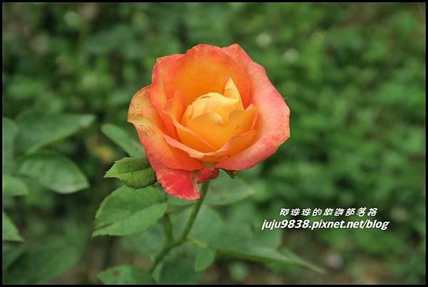 玫瑰山谷56.JPG