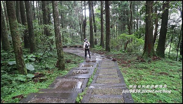 東眼山21.JPG