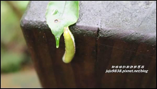 東眼山59.JPG