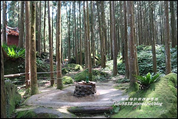 馬武督探索森林10.JPG