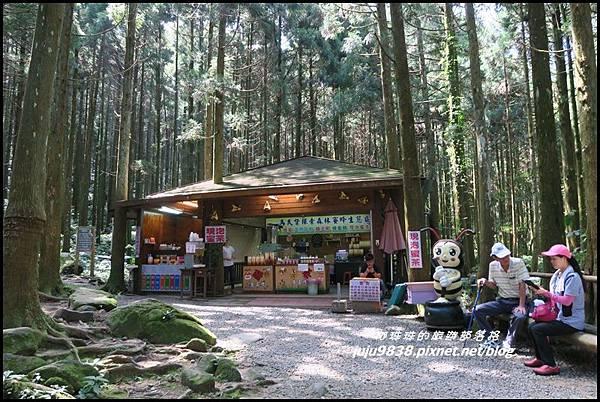 馬武督探索森林14.JPG
