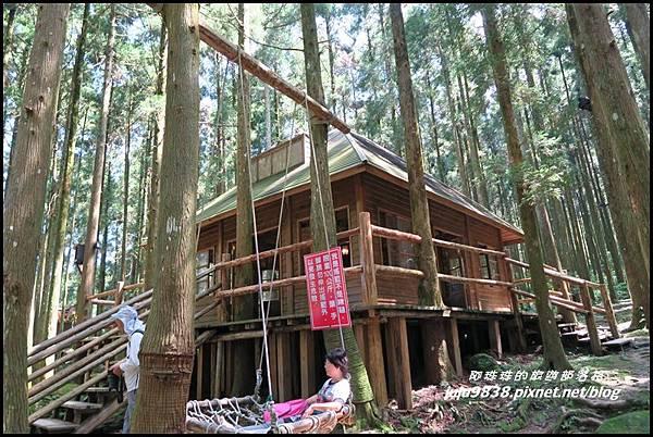 馬武督探索森林15.JPG