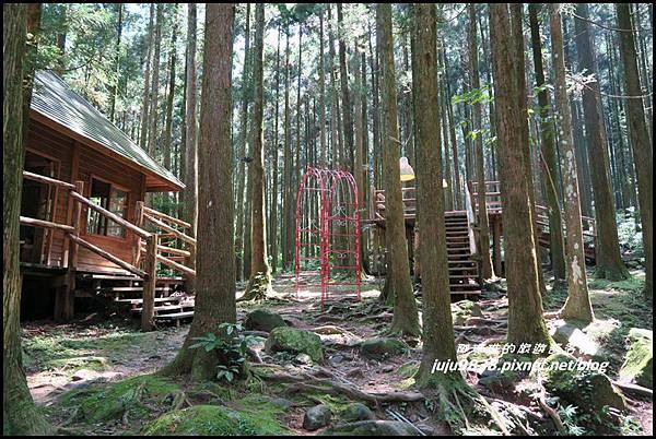 馬武督探索森林17.JPG