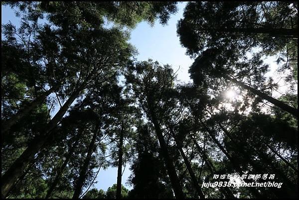 馬武督探索森林16.JPG