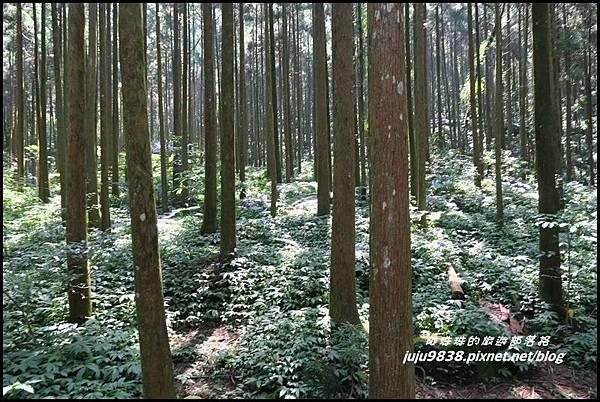 馬武督探索森林20.JPG
