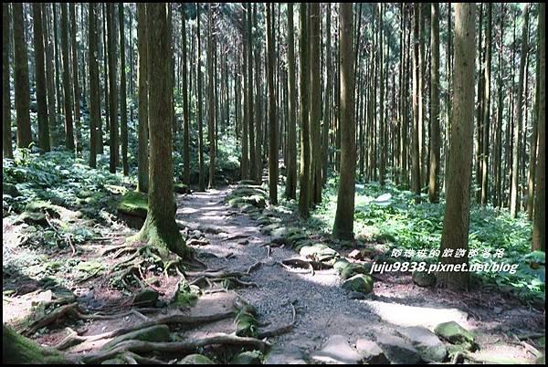 馬武督探索森林21.JPG