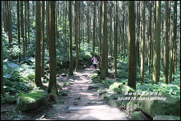馬武督探索森林22.JPG