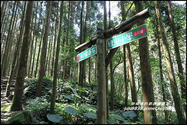馬武督探索森林30.JPG