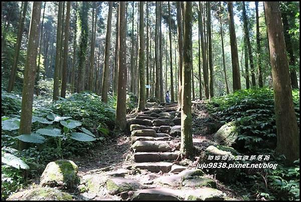 馬武督探索森林31.JPG