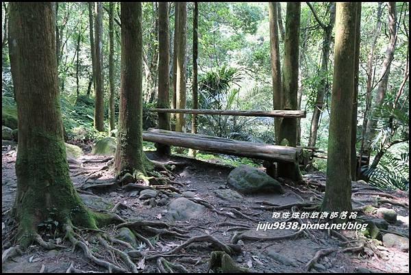 馬武督探索森林32.JPG