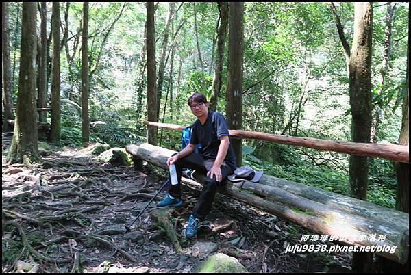 馬武督探索森林33.JPG