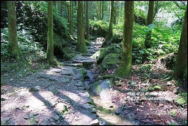 馬武督探索森林36.JPG