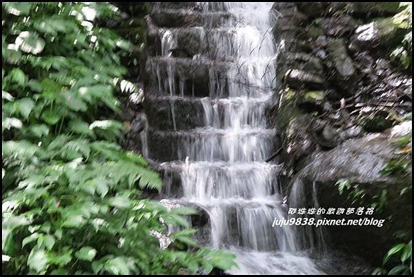 馬武督探索森林49.JPG