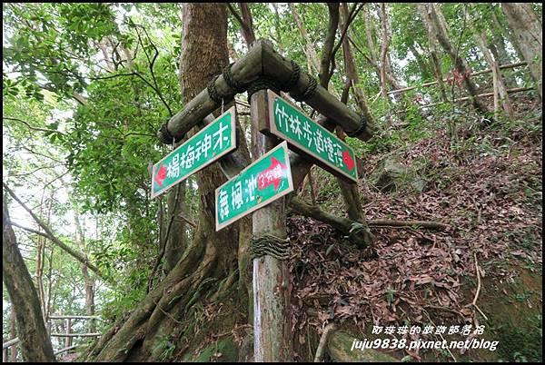 馬武督探索森林56.JPG