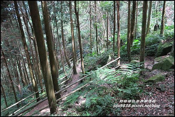 馬武督探索森林58.JPG