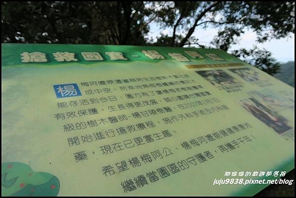 馬武督探索森林60.JPG