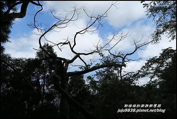 馬武督探索森林70.JPG