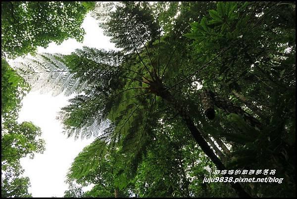 馬武督探索森林72.JPG