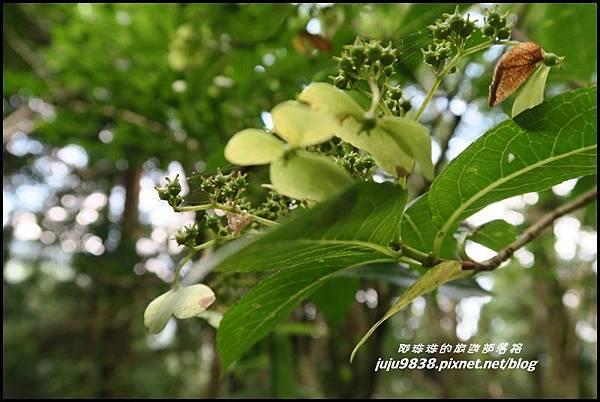 馬武督探索森林76.JPG