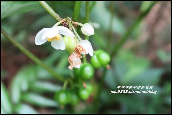 馬武督探索森林79.JPG