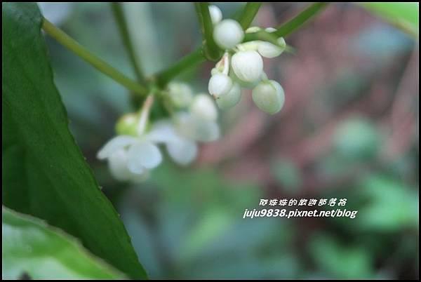 馬武督探索森林80.JPG