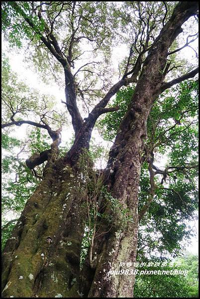 馬武督探索森林89