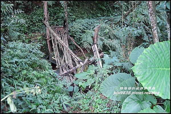 怪獸森林58.JPG